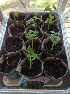green beans 1